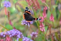 tuin vlinders